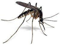 ICTP Malaria Project